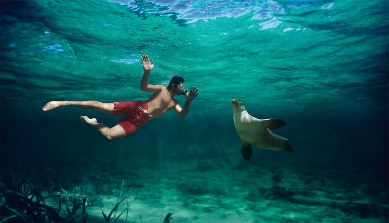 Swimming with the Sea Lions in Baird Bay SA © Caroline Fisher