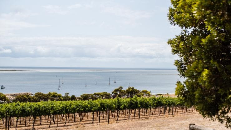 Bay of Shoals Wines, Kangaroo Island, SA © South Australian Tourism Commission