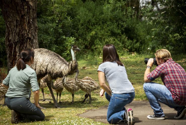 Melbourne Ke Adelaide 5 Hari Perjalanan Darat Tourism Australia