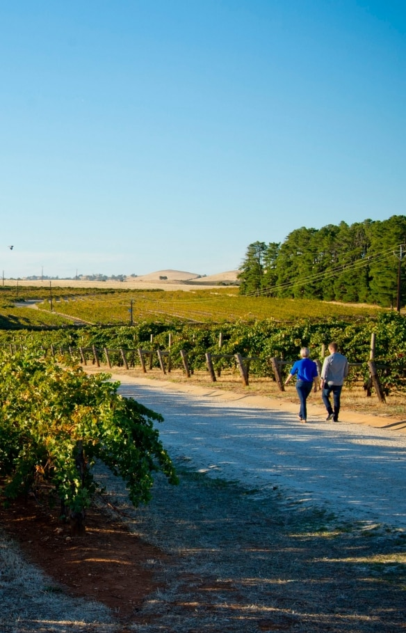 Sevenhill Cellars, Clare Valley, South Australia © Adam Bruzzone, South Australian Tourism Commission