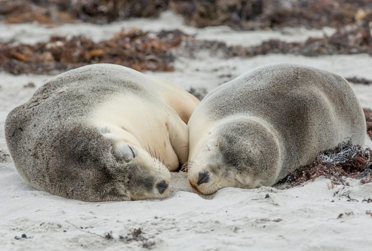 Seal Bay Conservation Park, Kangaroo Island, South Australia © Tourism Australia