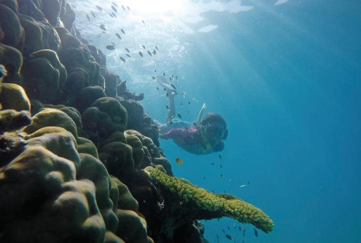 Snorkelling, Grande Barriera Corallina, Port Douglas, Queensland © Tourism and Events Queensland