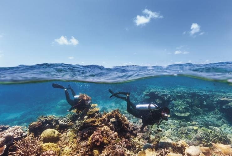 Immersioni subacquee ad Agincourt Reef, Tropical North Queensland © Tourism and Events Queensland