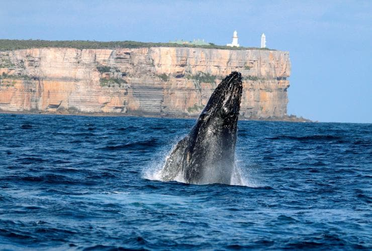 Avvistamento delle balene con Jervis Bay Wild, Point Perpendicular, Jervis Bay, New South Wales © Jervis Bay Wild