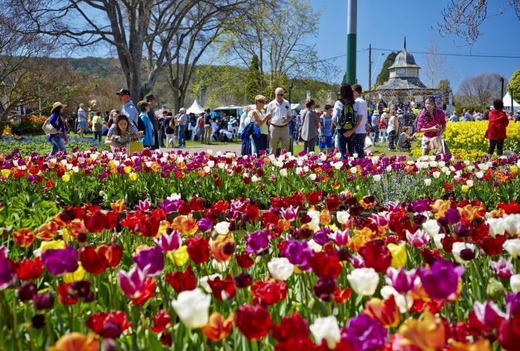 Tulip Time, Bowral, New South Wales © Destination NSW