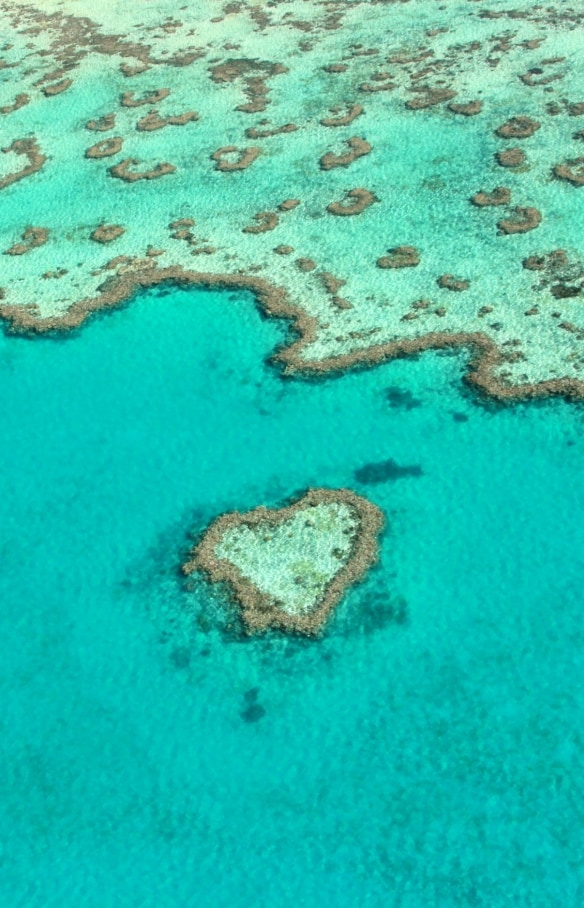 Heart Reef, Grande Barriera Corallina, Queensland © Tourism and Events Queensland