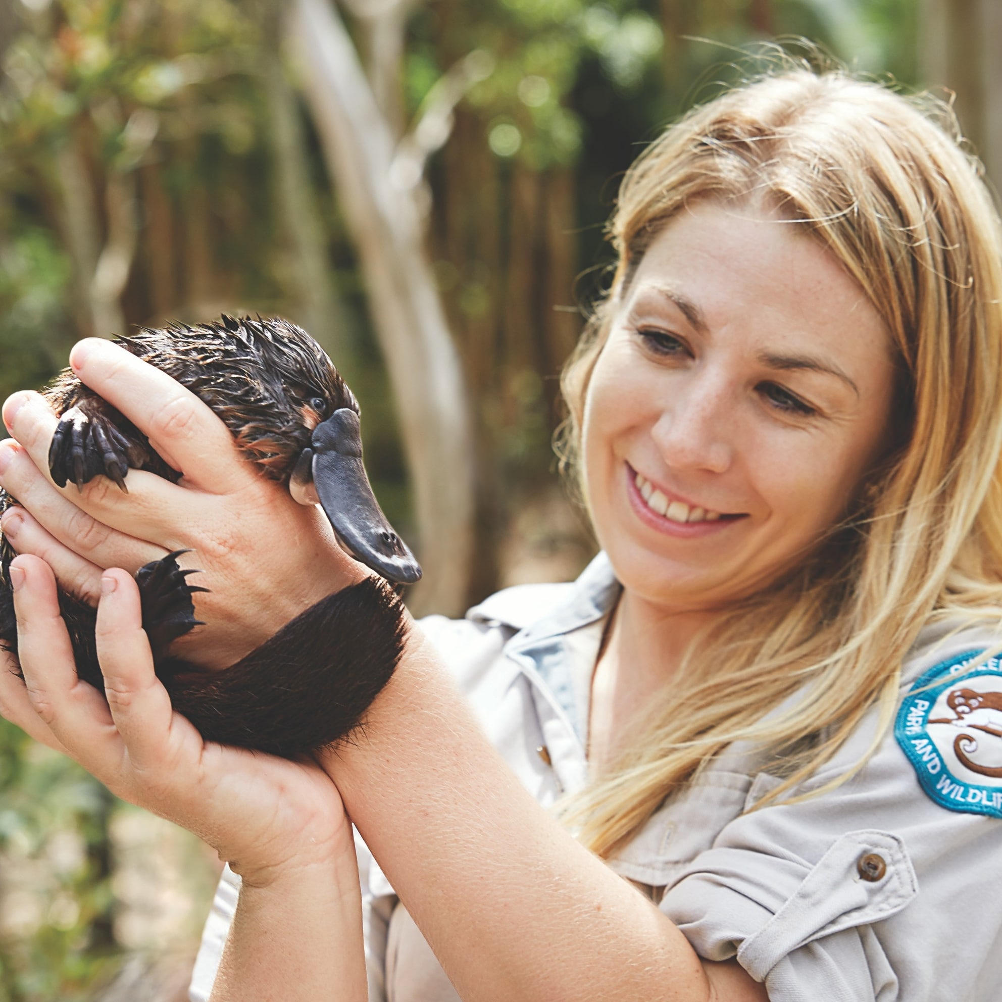 Ranger che tiene in braccio un ornitorinco al David Fleay Wildlife Park sulla Gold Coast © Queensland Government