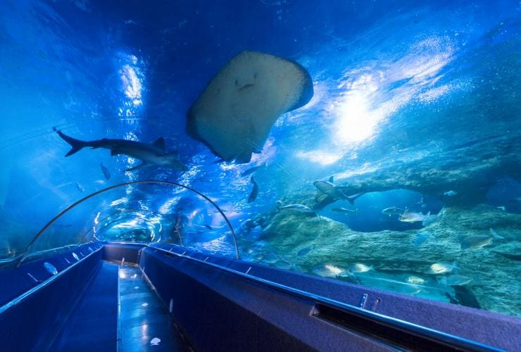 Tunnel dell'Aquarium of Western Australia di Hillarys © The Aquarium of Western Australia