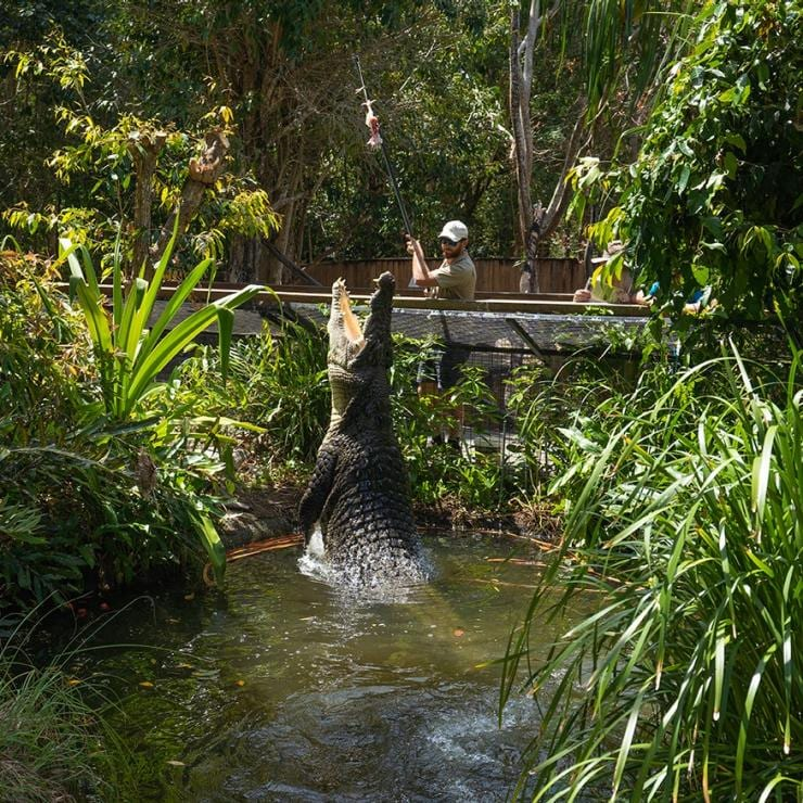 Il pasto dei coccodrilli nell'Hartley's Creek Crocodile Adventures Reptile Park © Tourism Australia