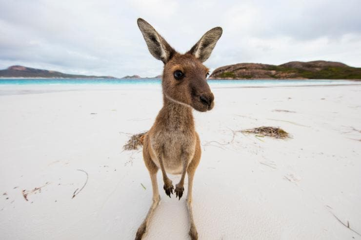 Lucky Bay, Cape le Grand National Park, WA © Sean Scott Photography