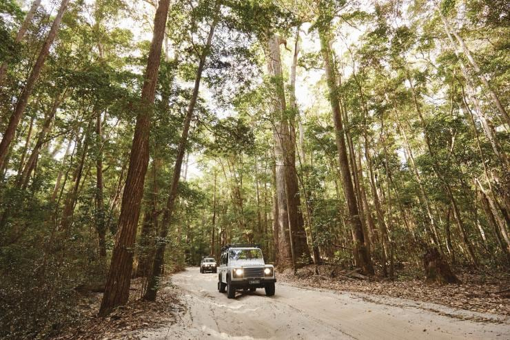 Foresta pluviale a Fraser Island, Queensland © Tourism and Events Queensland