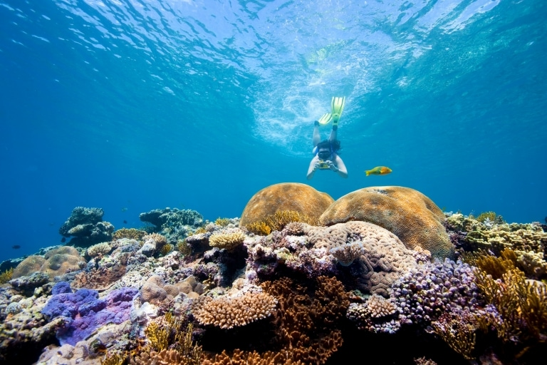 Snorkeling, Fitzroy Reef Lagoon, Great Barrier Reef, Queensland © Darren Jew, Tourism and Events Queensland