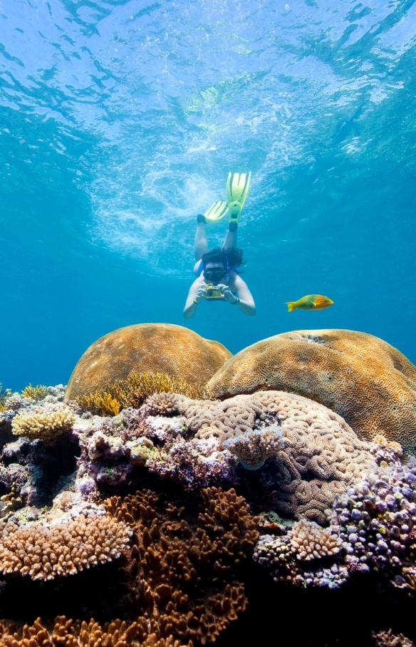 Snorkeling, Fitzroy Reef Lagoon, Grande Barriera Corallina, Queensland © Darren Jew, Tourism and Events Queensland