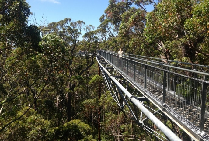 Valley of the Giants, Tree Top Walk, Walpole-Nornalup National Park, Western Australia © Tourism Australia