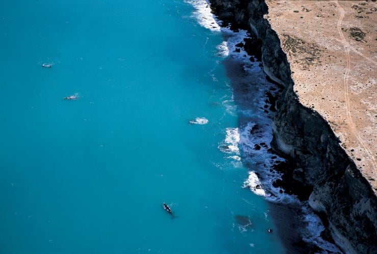 Head of Bight, Eyre Peninsula, South Australia © Adam Bruzzone, South Australian Tourism Commission