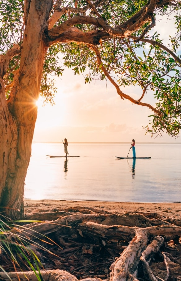 Paddleboarding, Noosa, QLD © Tourism and Events Queensland