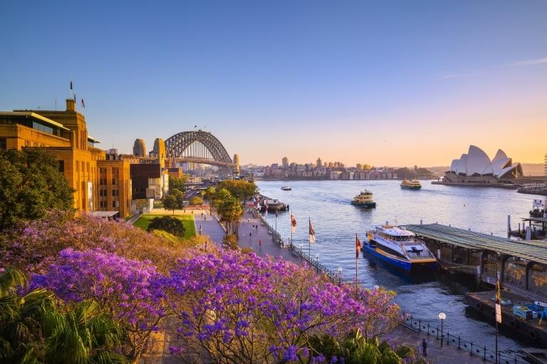 新南威爾士悉尼日落時分的藍花楹和悉尼海港©新南威爾士州旅遊局