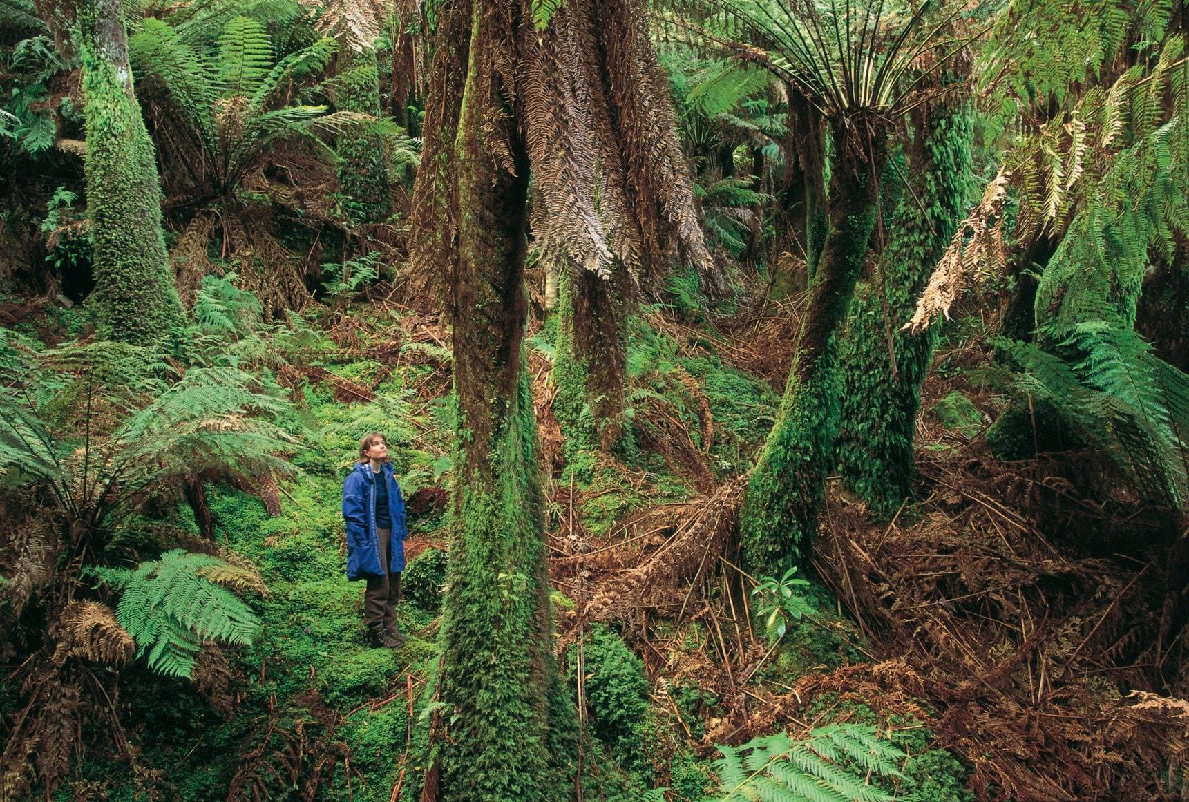 澳洲的雨林