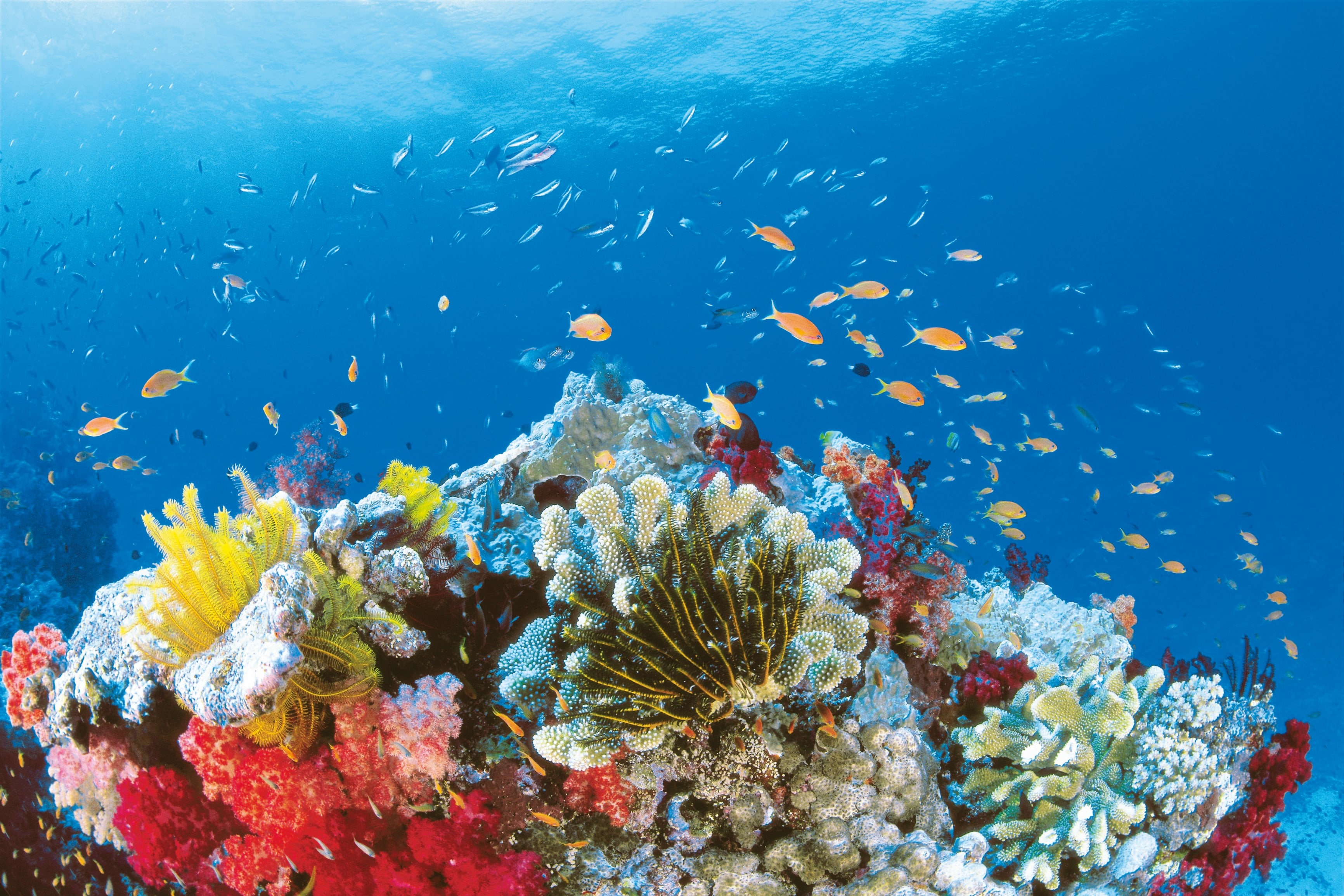 Sommerliches Unterwasser-Spektakel vor Queensland