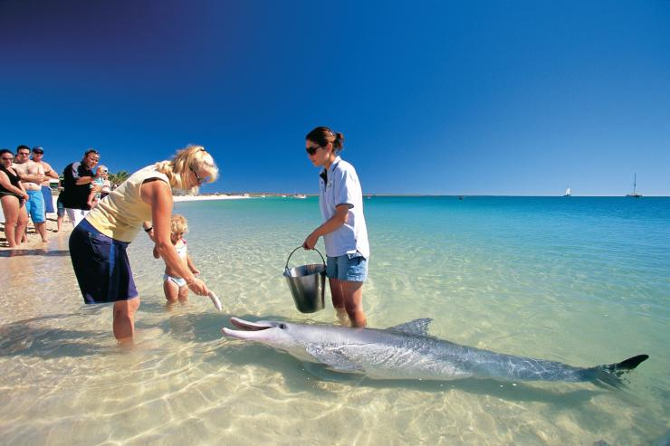 Dolphin feeding on the beach at Monkey Mia in Shark Bay © Tourism Western Australia