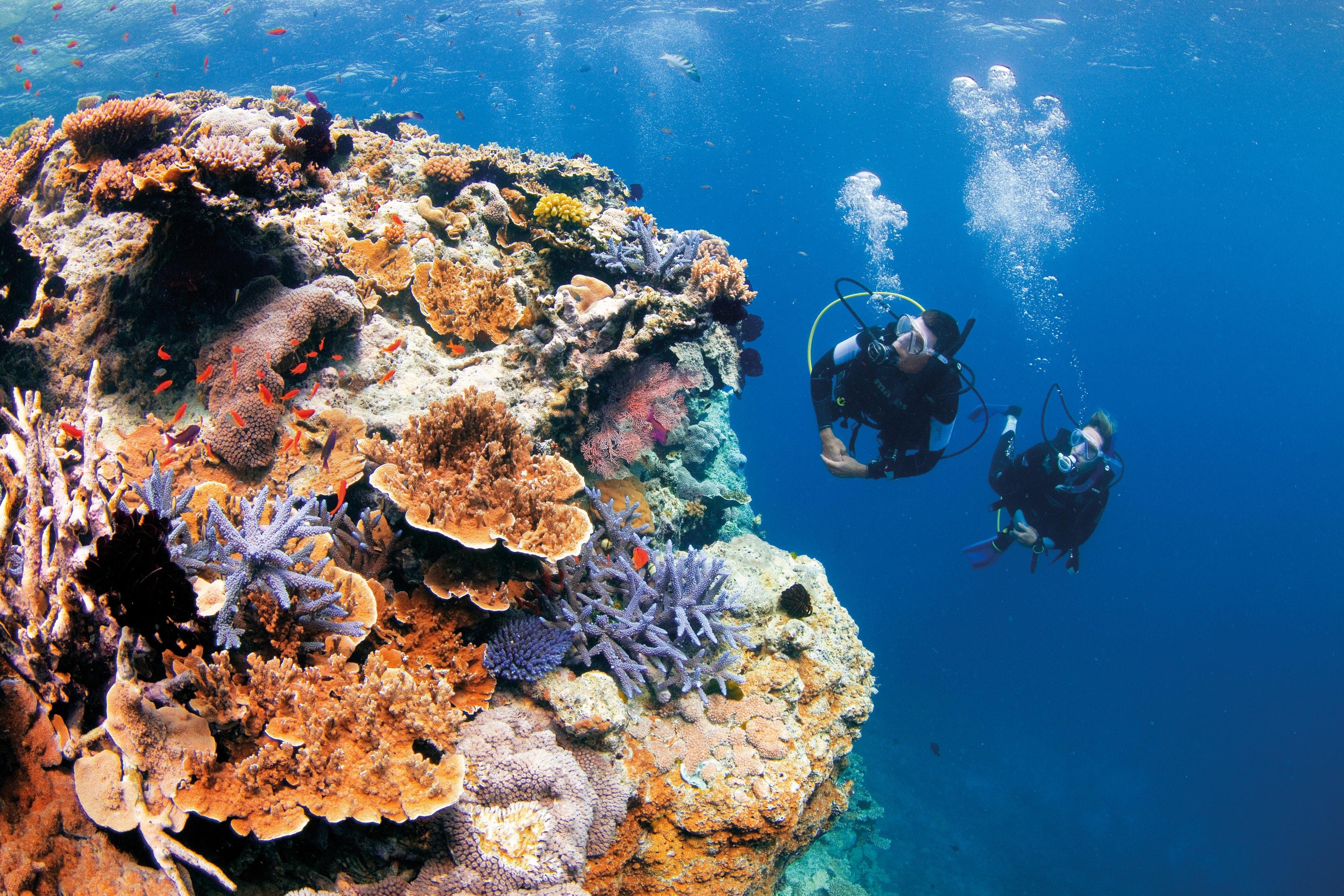 潛入昆士蘭的潛水天堂