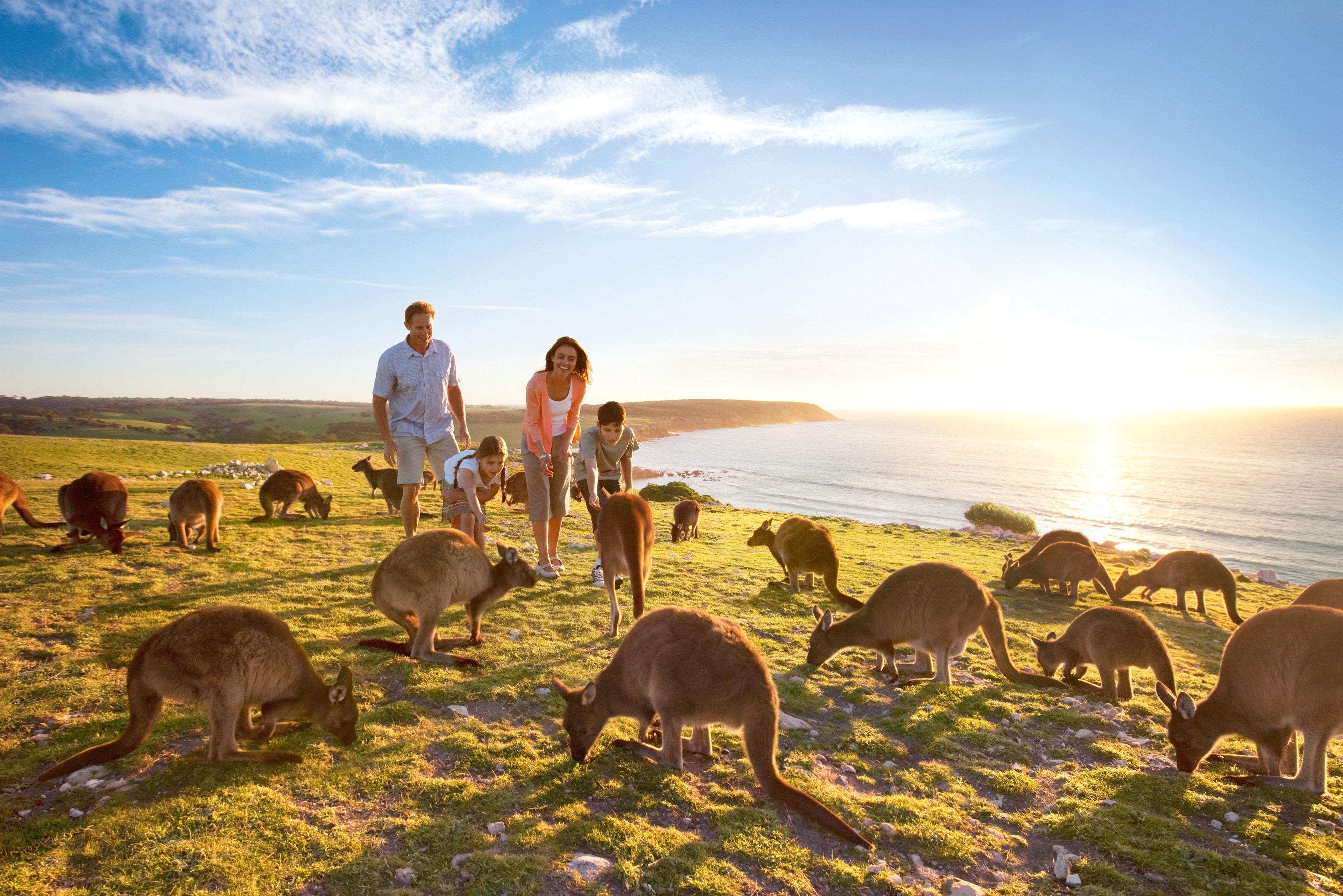 Allora Apartment Applecross guide to kangaroo island - tourism australia