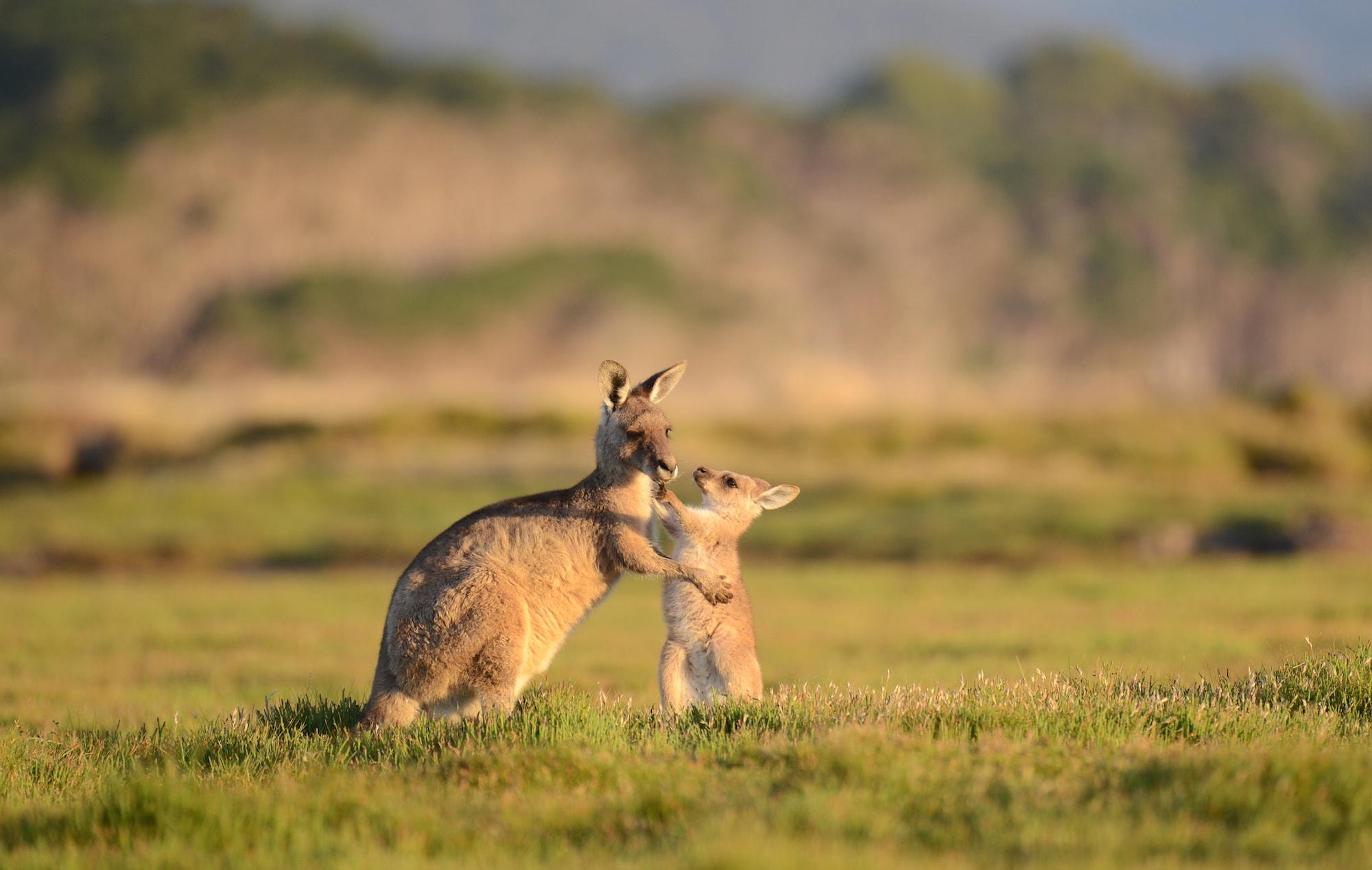 Satwa Australia Tourism Australia