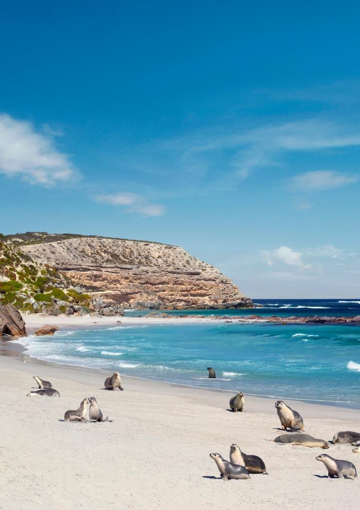 Sea lions at Seal Bay, Kangaroo Island © South Australian Tourism Commission