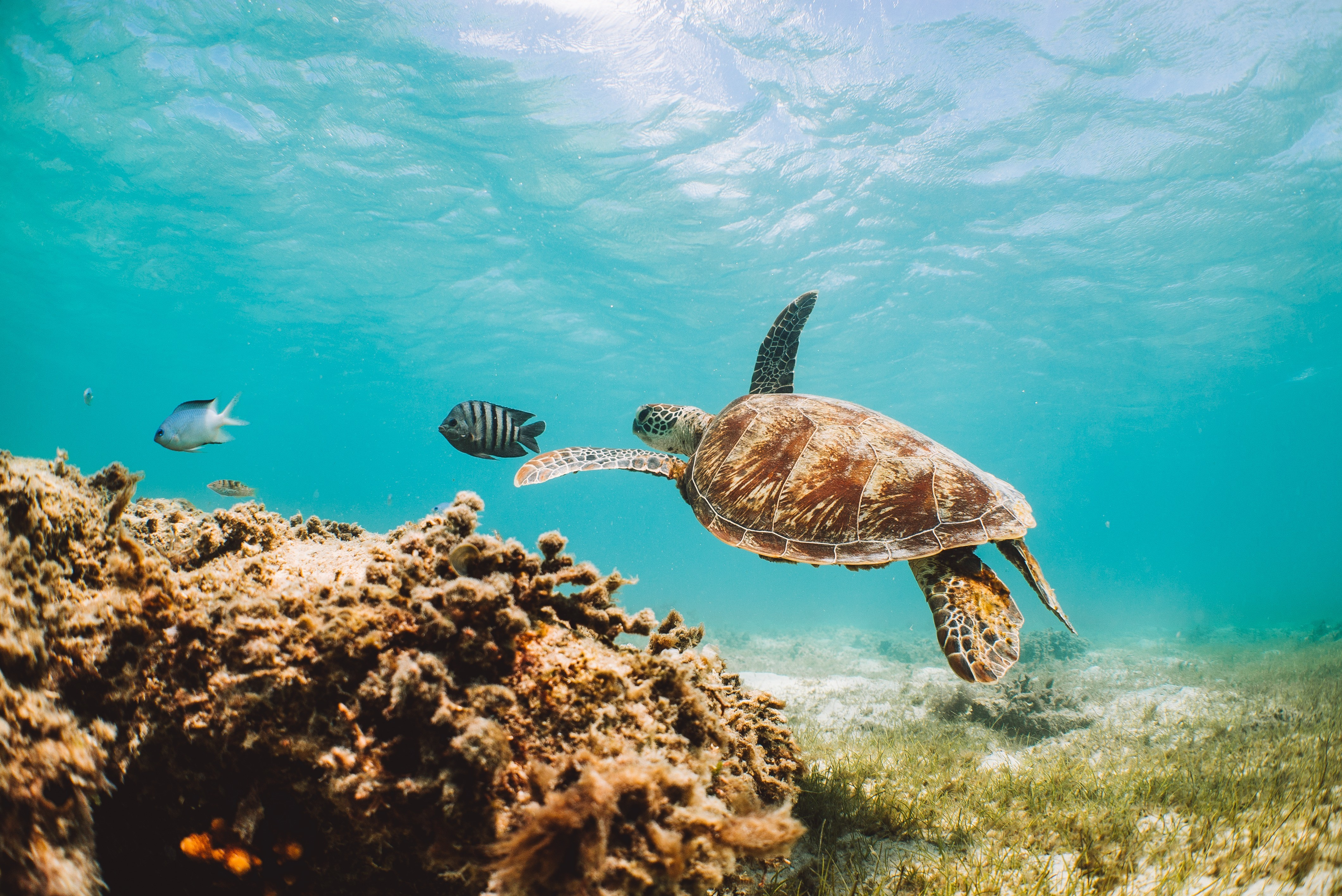 Queensland: Places to visit and things to do - Tourism Australia