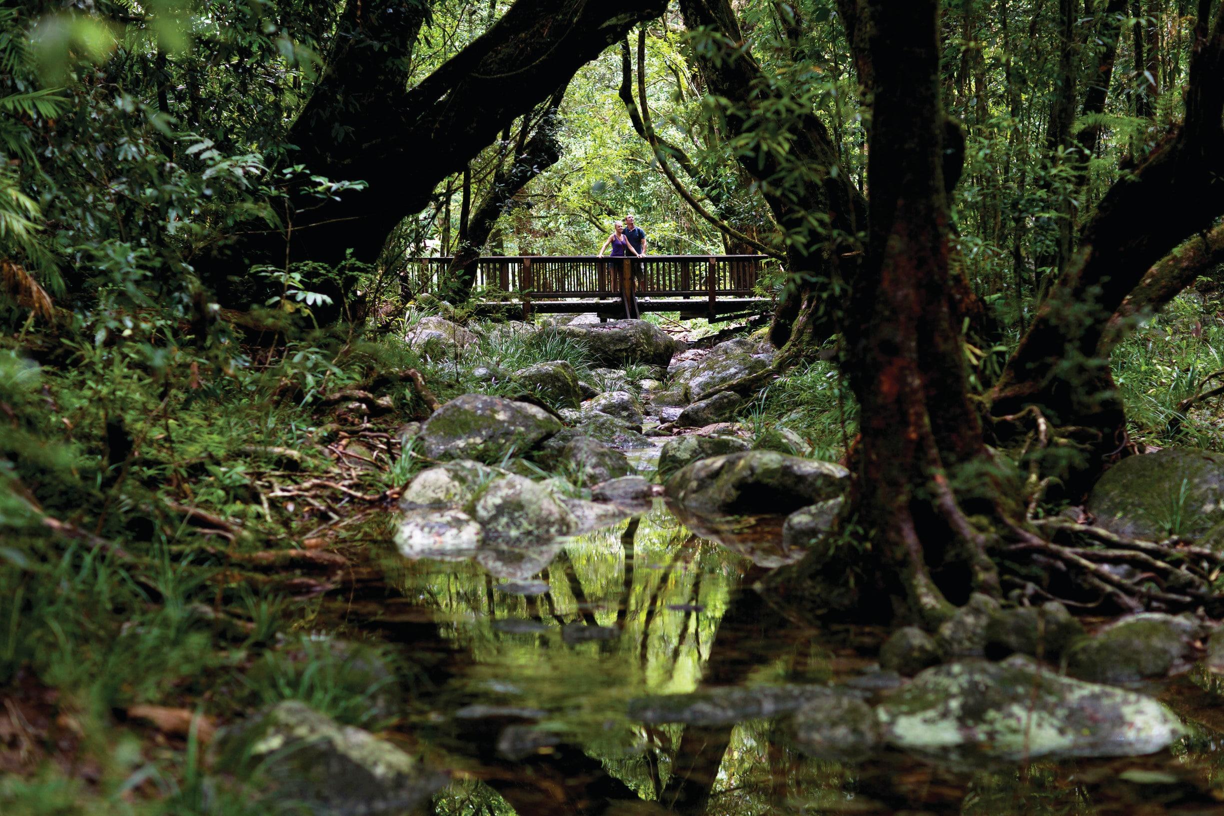 Guide to the Daintree Rainforest - Tourism Australia