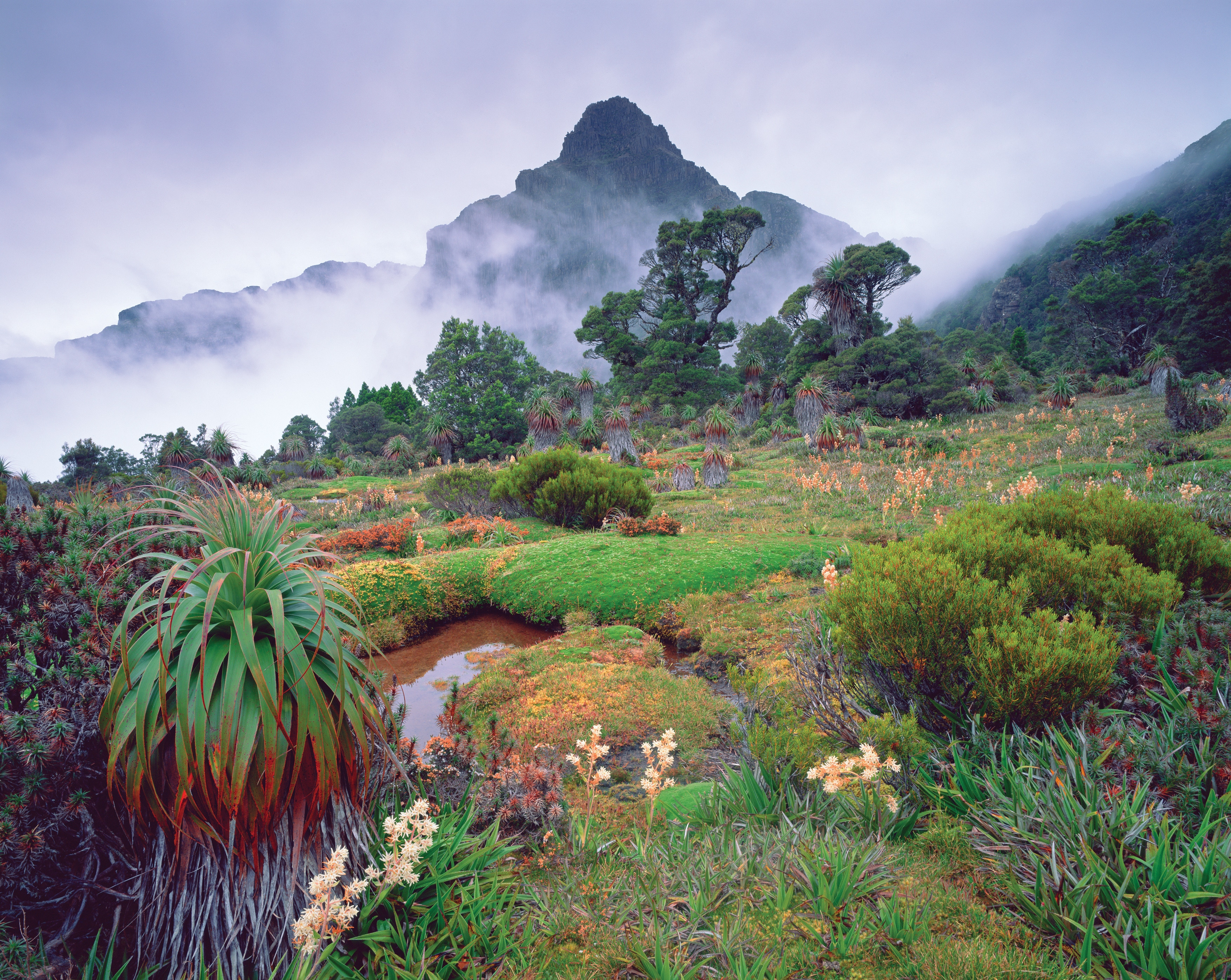 Alberi Ad Alto Fusto Quali Sono piante autoctone dell'australia - tourism australia