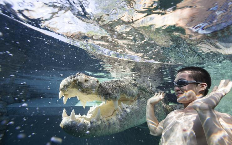 Cage of Death, Crocosaurus Cove, Darwin, Northern Territory © Tourism Northern Territory